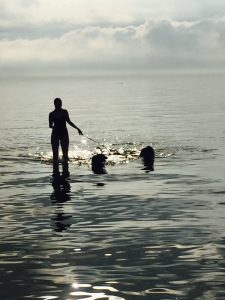 Dogs pets swimming