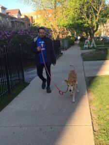 dogs dog walking