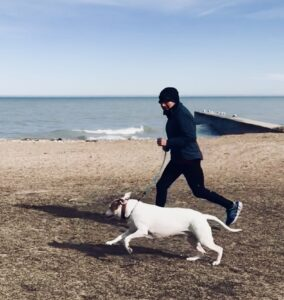 dogs running with dogs